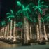 Palm Trees at Christmas in Miami